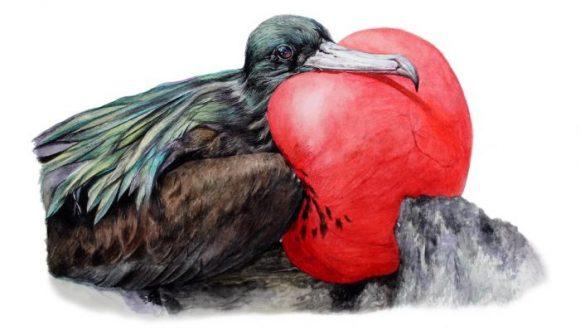 [El Mostrador] Publican libro que investigó sobre las 40 especies de aves de Rapa Nui