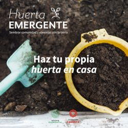 """Descubre cómo cultivar en tu jardín con nuestro manual """"Huerta Emergente"""" #AprendoEnCasa"""
